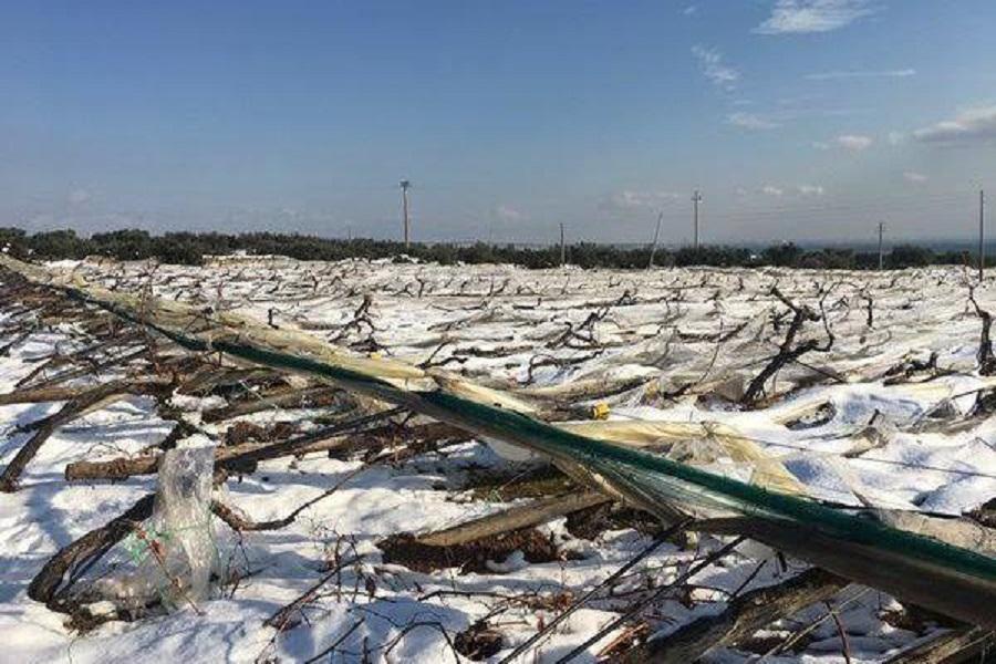 Calamità gelo. Risorse per le imprese danneggiate