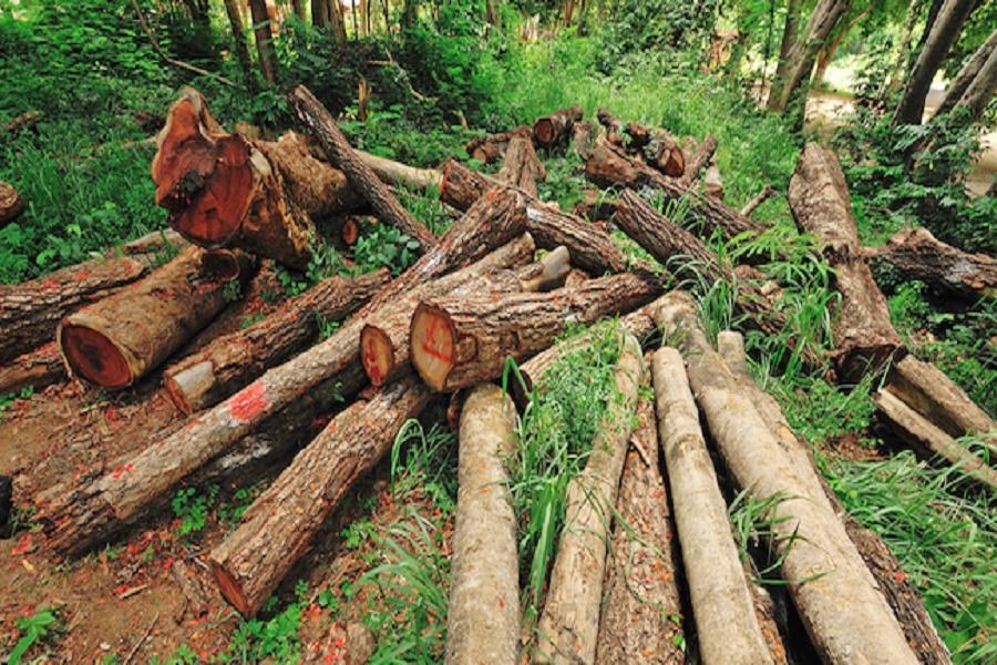 Tagliati oltre 150 alberi nel Tarantino: denunciate due persone