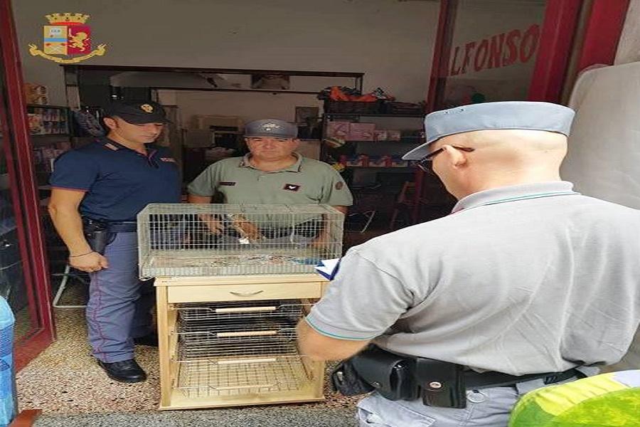 Furto di energia, arma illegale ed esplosivi: maxi intervento in un negozio di via Mazzini