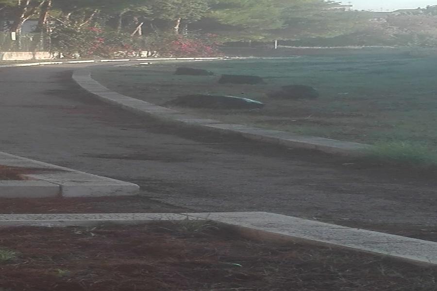 """Parco archeologico delle mura greche, i Verdi denunciano: """"Rifiuti e degrado"""""""