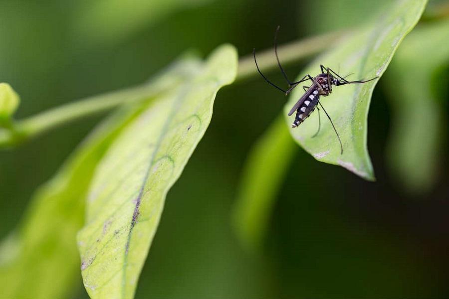 Invasione di zanzare