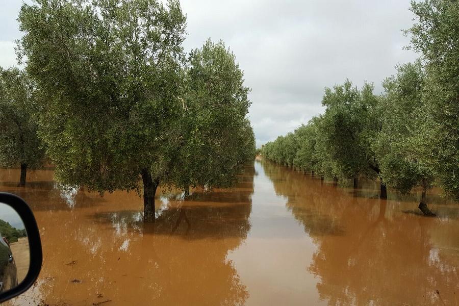 Maltempo, danni alle coltivazioni: a Taranto e Brindisi situazione pericolosa