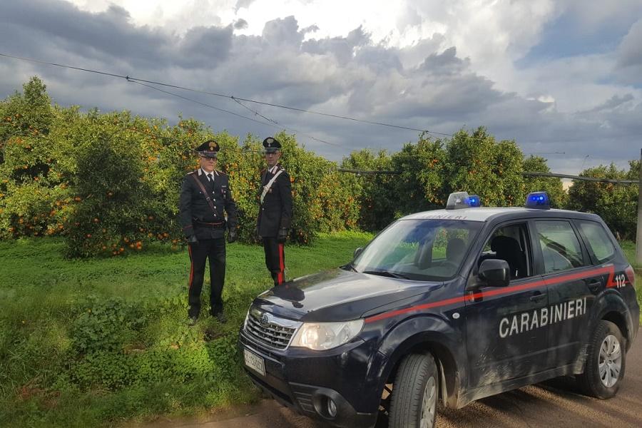 Rubano 400 kg di arance ma vengono sorpresi dai Carabinieri