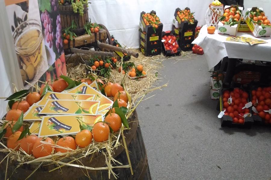 A Palagiano parte la 28 esima sagra del mandarino: stand, convegni e musica
