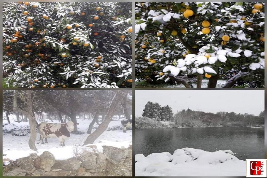 Emergenza freddo: a rischio ortaggi e agrumi nelle province di Taranto e Brindisi