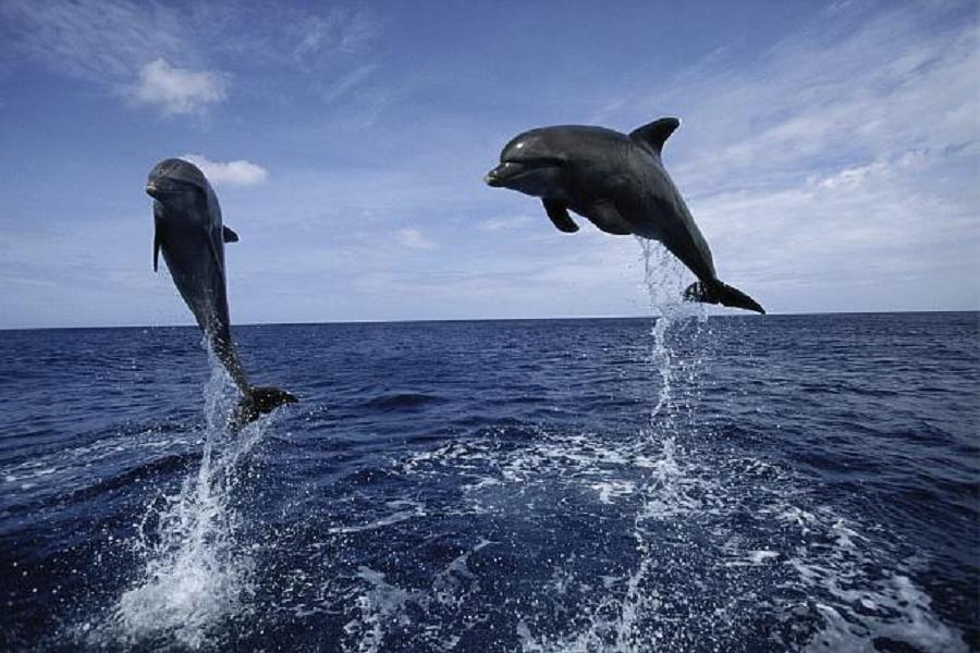 """WWF Italia lancia l'appello: """"Salviamo i cetacei e i delfini del Golfo di Taranto"""""""