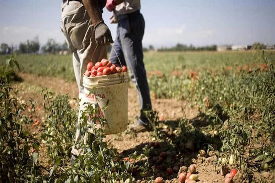 Paolo VI: sfruttava due extracomunitari, denunciato titolare di azienda agricola