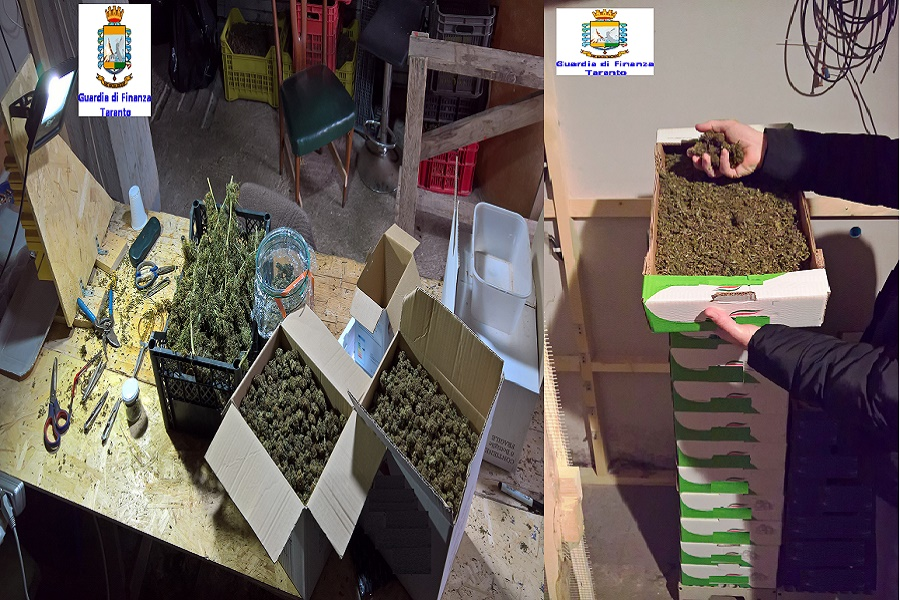 "Vendevano ""cannabis light"": denunciata ditta di Martina Franca"