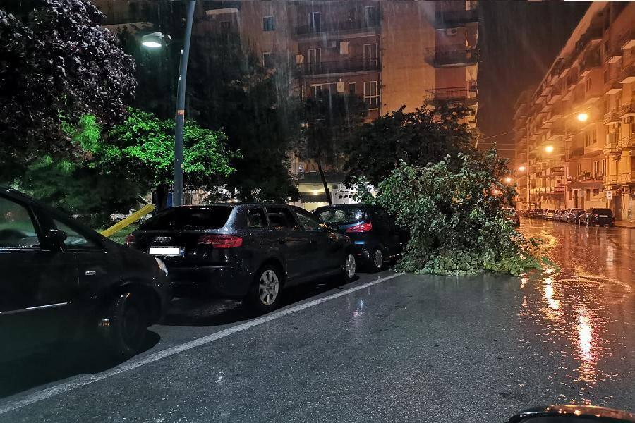 Ecco perché piovono alberi in città