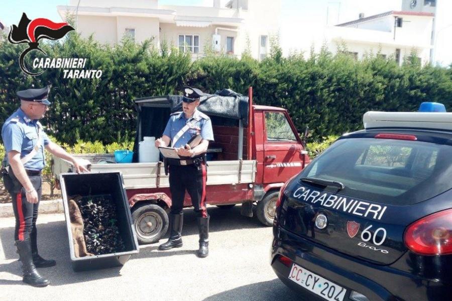 I carabinieri scoprono prodotti ittici in cattivo stato di conservazione