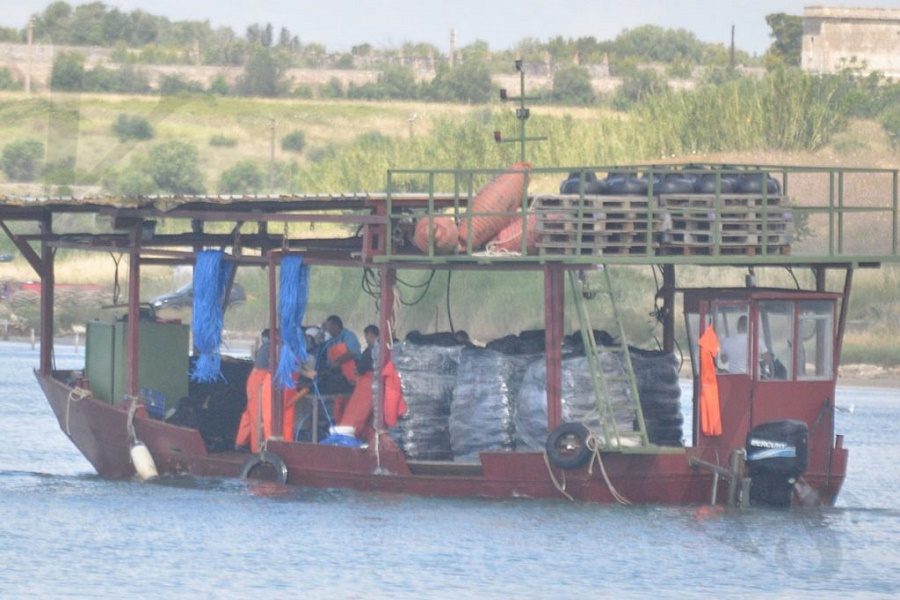 """Affari illeciti in mar Piccolo, Veraleaks denuncia: """"Traffico dalla Grecia di mitili""""Affari illeciti in mar Piccolo, Veraleaks denuncia: """"Traffico dalla Grecia di mitili"""""""