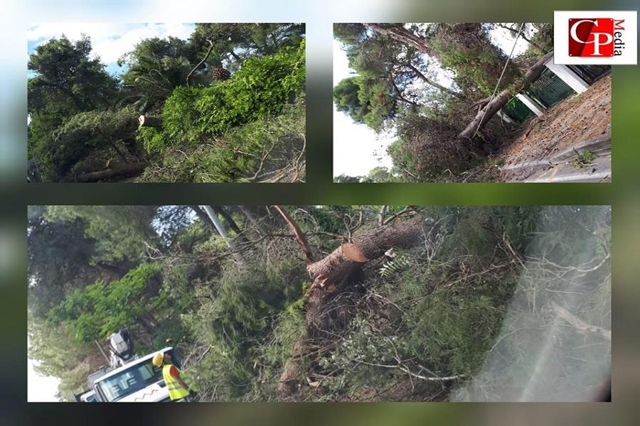 Maltempo, alberi pericolanti: la vera sfida comincia ora