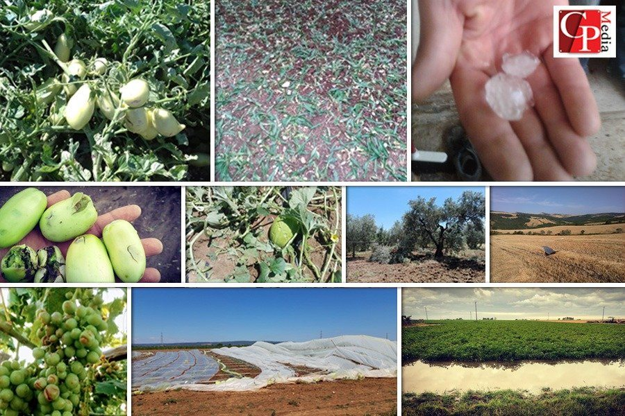 """Eventi estremi, CIA Puglia: """"Agricoltori ostaggi del clima e del rischio idraulico"""""""