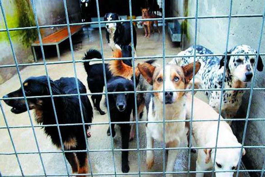 """Anche a Taranto il """"Bonus Cani""""?"""