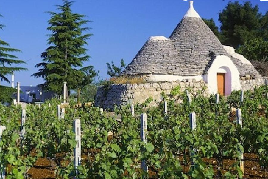 Uva da vino. In Puglia aumento del 3 %