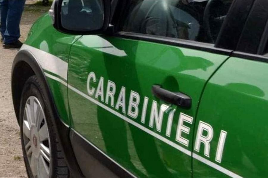 """Due asini alla """"gogna"""": salvati dai carabinieri Forestali"""