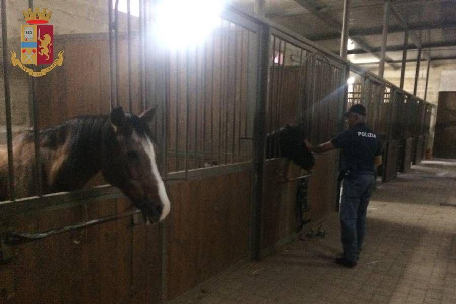 Cavalli maltrattati