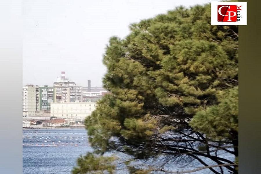 Legambiente: 200 mila alberi per la Taranto 2025