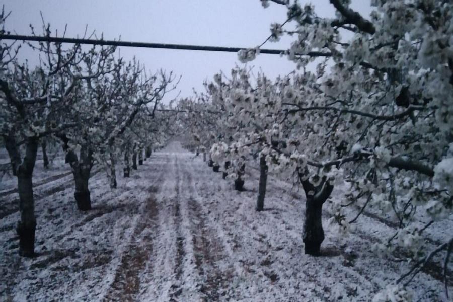 """Cia Puglia: """"Gelate colpo di grazia per l'agricoltura della regione"""""""