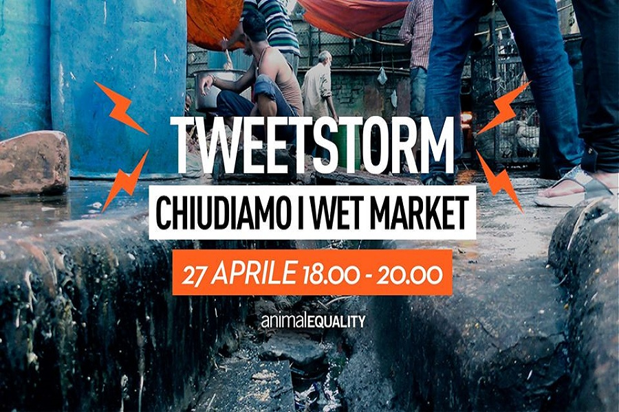 "CHIUDIAMO I WET MARKET. Animal Equality lancia il ""tweetstorm"""
