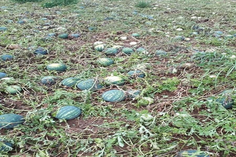 Taranto, maltempo: violenta grandinata distrugge coltivazioni